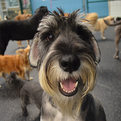 Dogspot Is The Place For Top Quality Dog Boarding Dog Daycare And